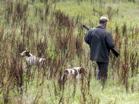 Jagt i Hadsten & Omegns Jagtforening